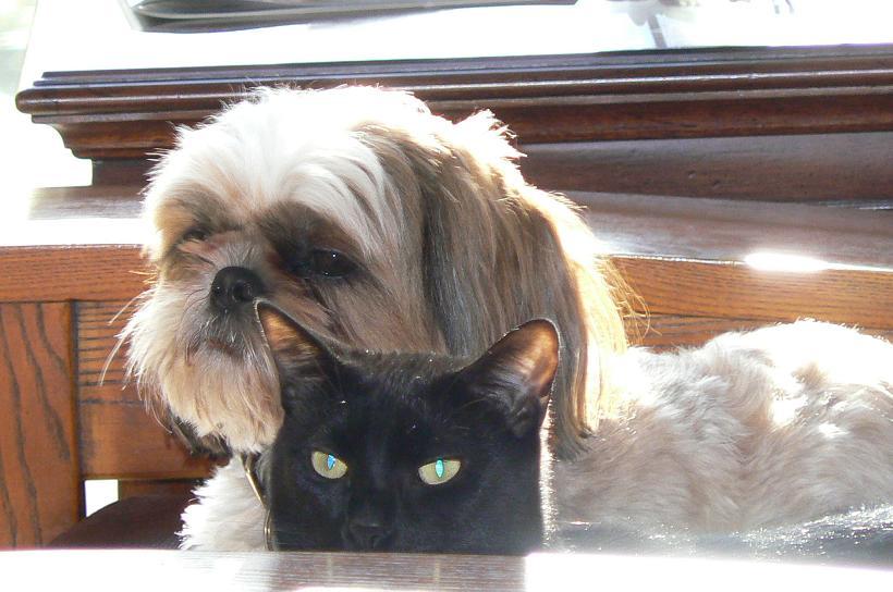Show Us Your Pets!-zzzzzzzzzzzzzzzjazzy-hopper-smallerp1050637.jpg